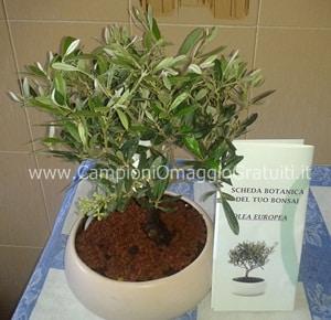 Bonsai di ulivo in regalo da palmolive for Bonsai di ulivo
